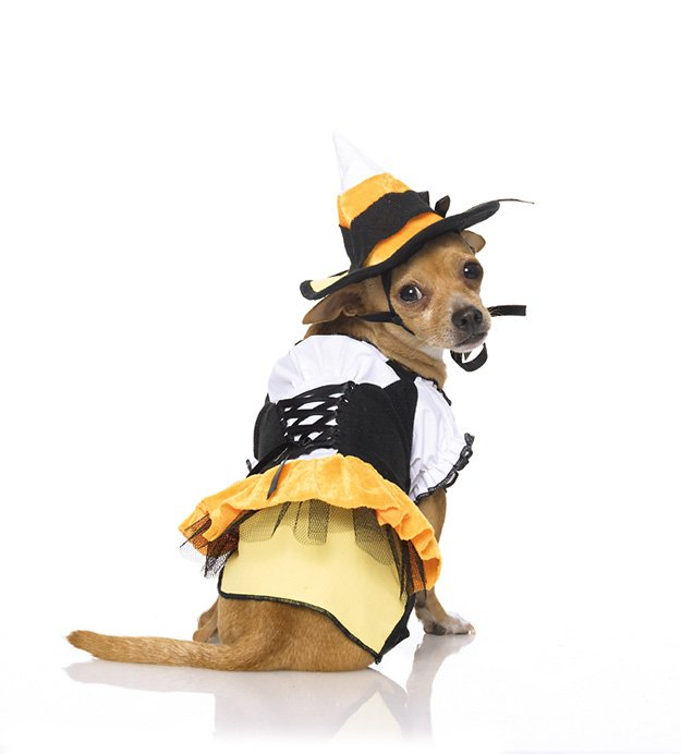 Puppy Kandy Korn Witch Costume