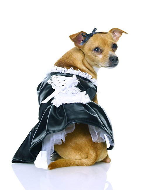 French Maid Puppy Costume